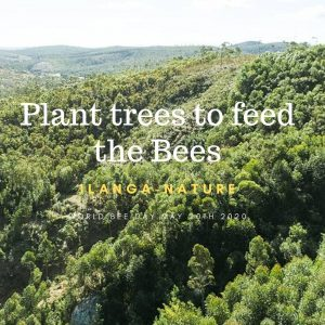 Plant Trees to Feed the Bees