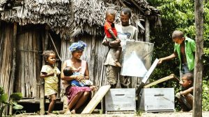 Malagasy beekeeping family